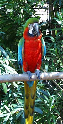Parrots at Garden of the Groves